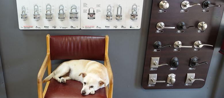 Cedar Park Lock and Key mascot, Sydney, relaxing with the locks